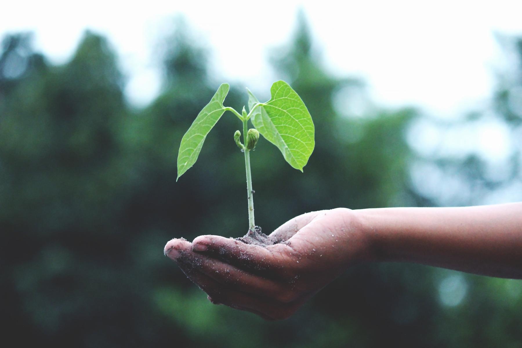 Hosting verde, eco hosting Interactivos